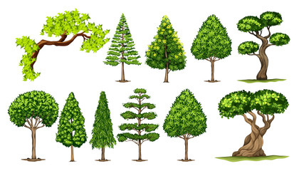 Different kinds of trees