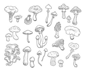 Mushrooms. Set of different types of forest mushrooms drawn by hand. Vector.