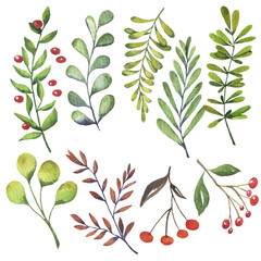 Green leaves and autumn berries set painted by watercolor. Hand drawn vector illustration.