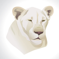 Vector illustration of a white lion head portrait isolated on white background.