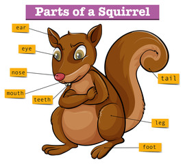 Diagram showing different parts of squirrel