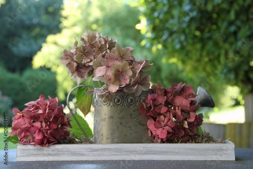 dekoration mit hortensienbl ten und giesskanne im garten. Black Bedroom Furniture Sets. Home Design Ideas