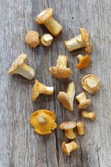 Group of chantarelles mushroom on a wooden plank