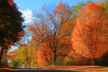 Fall foliage in autumn time