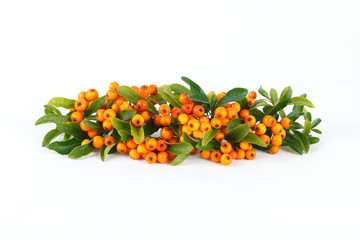 Sea buckthorn berries isolated on white background