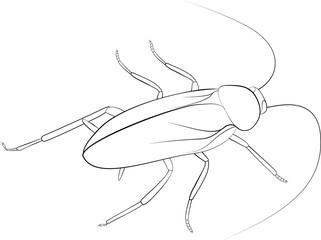 Cockroach sketch black monohrome color isolated on white background