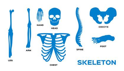 Human bones skeleton silhouette collection set. Vector illustration.