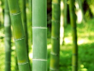 竹 夏の風景