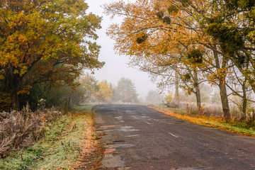 road through foggy forest in autumn