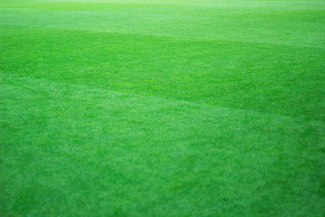 Classical football field photo. Natural green lawn