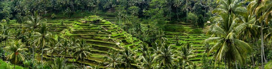 Fotobehang Indonesië Rizières en terrasse de Tegalalang, Bali, Indonésie