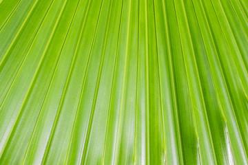 Leaf background in close up