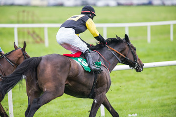 racehorse and jockey galloping