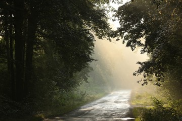 Morning rays in the deciduous forest after rainfall