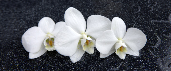 Three white orchid flowers .