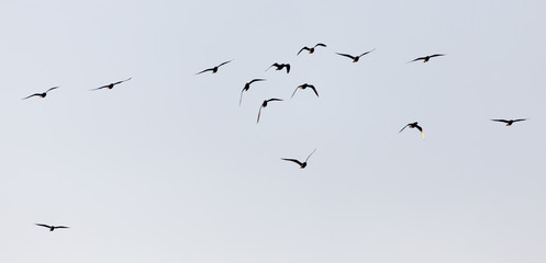 a flock of seagulls in the sky at sunset