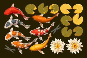 Set of koi fish and lotus