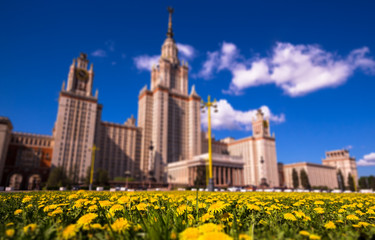 Blurred tilt and shift view of bright sunny yellow dandelions of Moscow university in spring