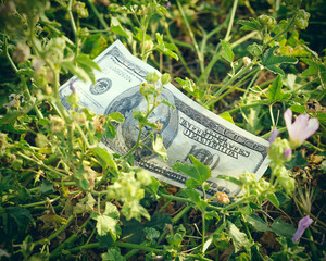 Fake American hundred-dollar bill thrown in the grass