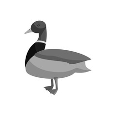Mallard duck icon in black monochrome style isolated on white background vector illustration