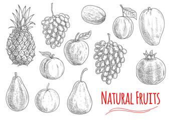 Natural fruits sketches for vegetarian food design