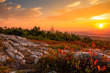 Blueberry bushes turn a beautiful vivid red in early autumn as the sun sets at the top of High Point State Park, New Jersey