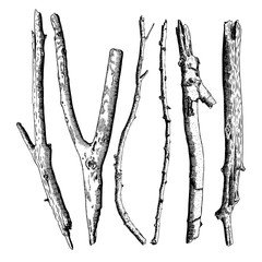 Hand drawn twig branches set. Ink illustration wood twig collection, isolated nature forest object, tree branch, stick bundle. Highly detailed ink art classic drawing elements. Vector.