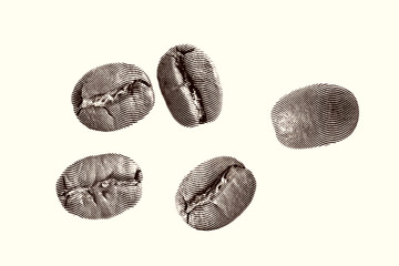 Close up Sketch painting coffee beans on a white background Black and white