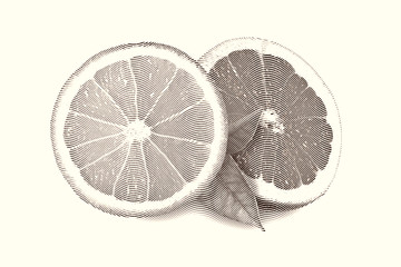 Drawn Sketch painting orange and grapefruit painting on white background. Black and white