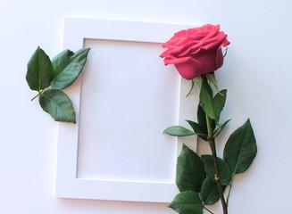 Белая пустая фоторамка и розовая роза на белом фоне.