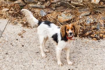 Perro en el pueblo de Vega del Castillo, Sierra de la Cabrera, Zamora.