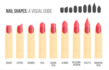 Nail shapes. Visual guide.