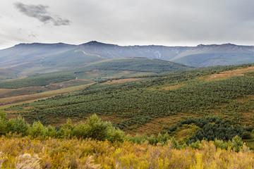 Pinares y cordal del monte Vizcodillo. Sierra de la Cabrera, Zamora.