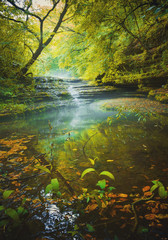 Magic forest river