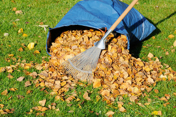 autumn leaves and rake on meadow