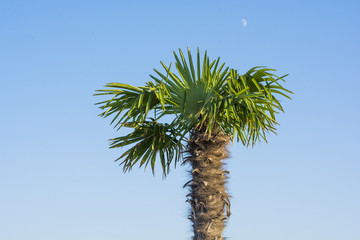 Young palm tree against the blue sky