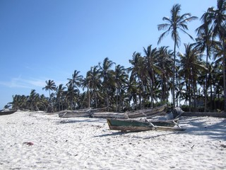Kenia Diani Beach / Palms