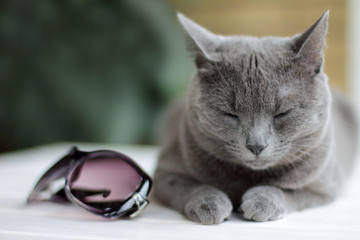 good dream is a rest for the eyes/ cat with eyes closed, next to sunglasses