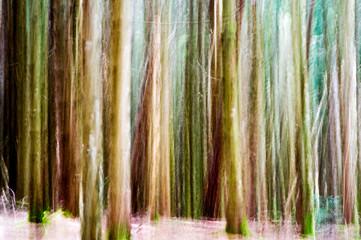 Alla ricerca delle fate nel bosco incantato
