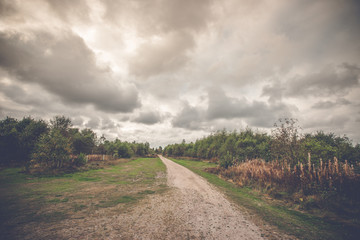 Long nature trail in cloudy weather