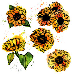 Set of yellow sunflowers freehand vector and watercolor drawings