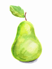 Isolated watercolor pear on white background. Soft and sweet juicy fruit.