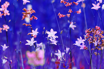elegant background with beautiful flowers, daisies, bluebells and grass