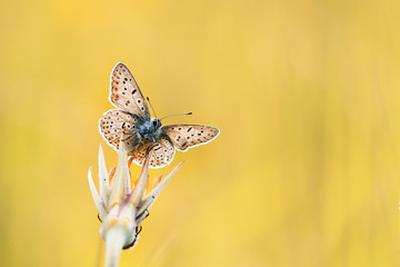 beautiful blue butterfly sitting on a flower on a Sunny meadow