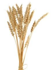 Weizen - Ähre