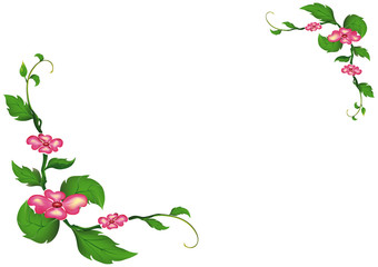 The beautiful pink flowers and green leaves isolated on white background.