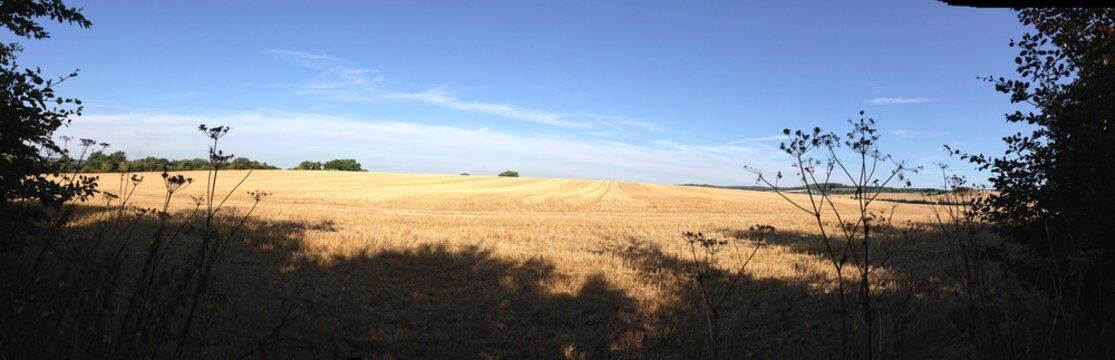 The fields of Kent