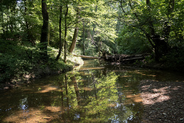 River deep in mountain forest. Nature composition. Mountain river flowing through the green forest..