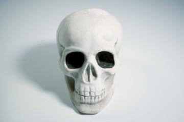 Detailed skull on white background