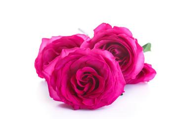 beautiful bright pink roses